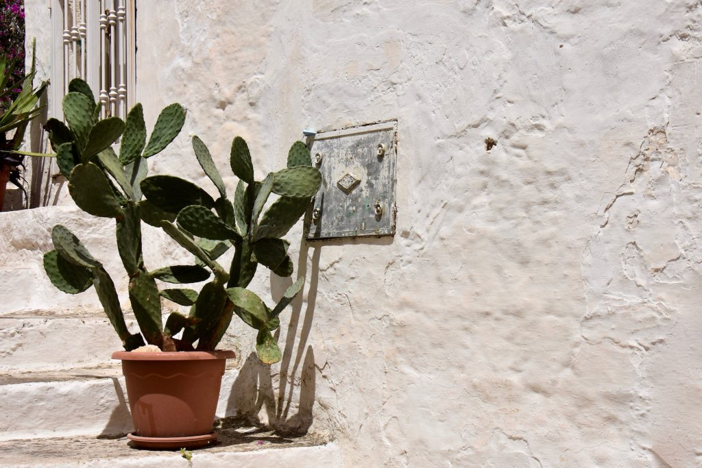 cactus in ostuni