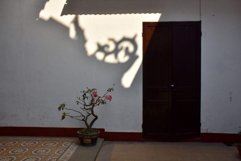 plumeria with shadow
